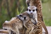 Photo for Meerkat Manor