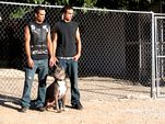 Photo for Pit Bulls and Parolees