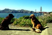 Photo for Homeward Bound 2: Lost in San Francisco