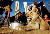 Photo for Christian the Lion