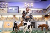Photo for Puppy Bowl VII