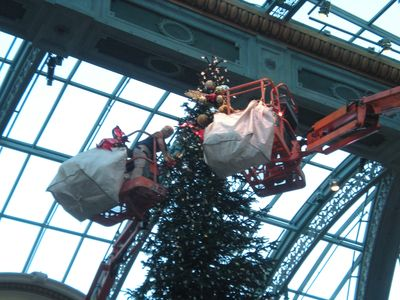 Extreme Christmas Trees : Programs : DMAX : Discovery ...