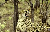 Photo for Cheetah Race To Rule