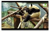 Photo for PANDACAM ON ANIMAL PLANET L!VE
