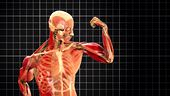 Photo for Human Body Ultimate Machine