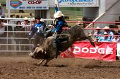 Photo for Rodeo: Life on the Circuit