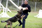 Photo for K9 Cops