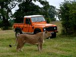 Photo for Safari Park Adventure 3D