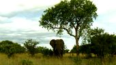 Photo for Africa's Trees of Life