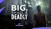 Photo for BIG, SMALL & DEADLY