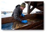 Photo for Bering Sea Gold