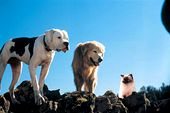 Photo for Homeward Bound: The Incredible Journey