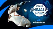 Image for HOW DO ANIMALS DO THAT