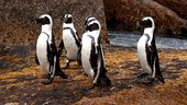 Photo for Meet The Penguins