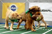Photo for PUPPY BOWL XII