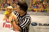 Photo for PUPPY BOWL XIII