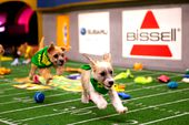 Photo for PUPPY BOWL XV
