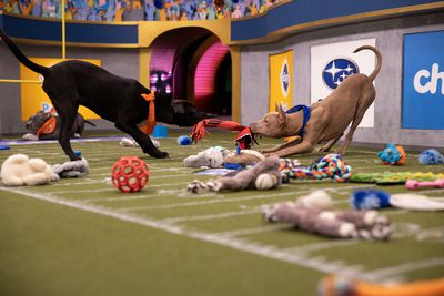 Image from PUPPY BOWL XVI