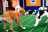 Photo for PUPPY BOWL XVII