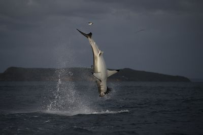 SHARK WEEK 30TH ANNIVERSARY : Programs : Discovery Channel