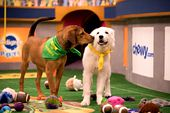 Image for PUPPY BOWL XIV