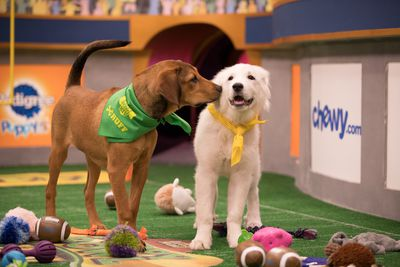 Image from PUPPY BOWL XIV
