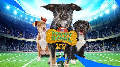 Image from PUPPY BOWL XV