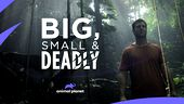 Image for BIG, SMALL & DEADLY