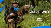 Image for COYOTE PETERSON: BRAVE THE WILD