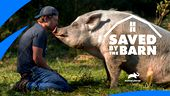 Image for SAVED BY THE BARN