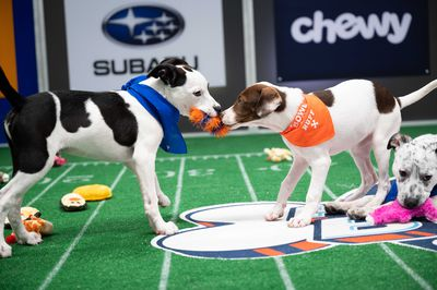 Image from PUPPY BOWL XVII