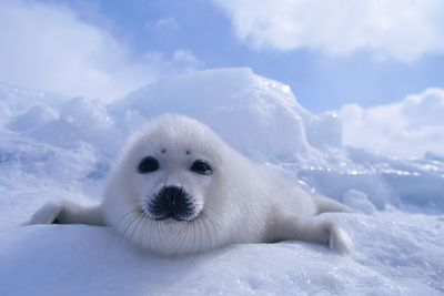 Image from Wildest Arctic
